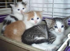CatNap Fostering